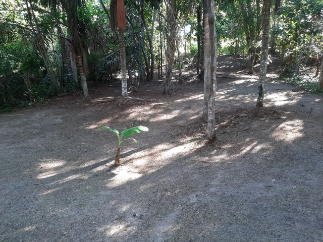 Vendo terreno no Bela Vista ( puraquequara ) - Foto 5
