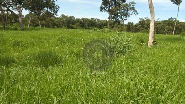 Fazenda 200 hectares na beirada br 070 - Foto 6