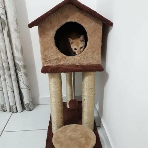 Casinha e arranhadores para gatos
