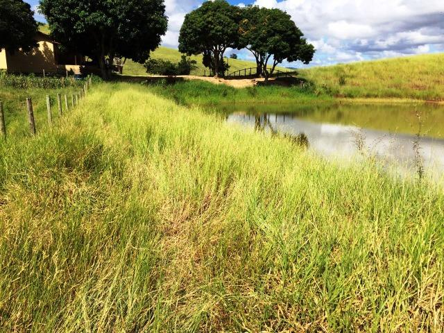 Fazenda 1001 hectares próximo a Teófilo Otoni/MG - Foto 6