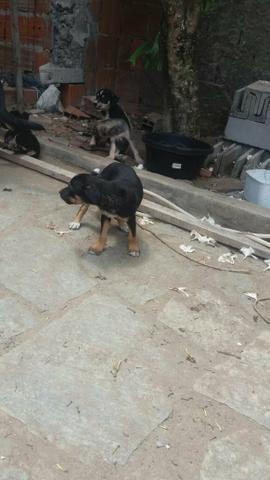 Cãezinhos par doação - Foto 3