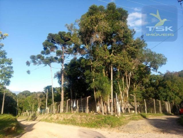 CH0386 - Chácara à venda, 6050 m² por R$ 130.000 - Zona Rural - Quitandinha/PR - Foto 20
