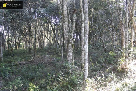 Terreno para Venda em Lagoa Tijucas do Sul-PR - Foto 7