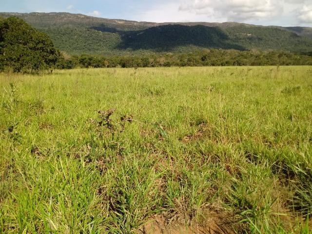 Fazenda de 784,77 hectares ha 140 km de Cuiabá em Rosário Oeste MT - Foto 17