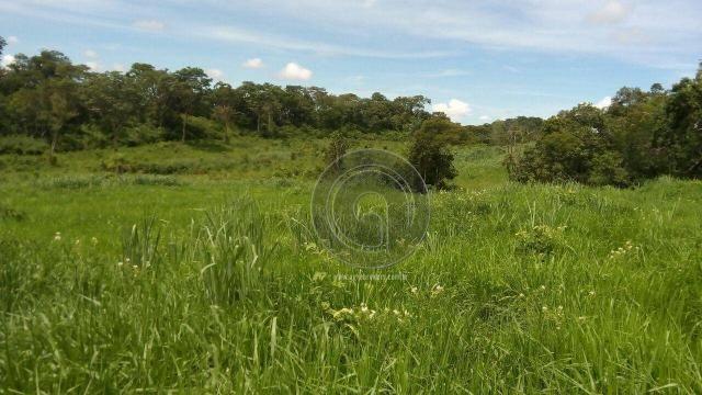 Fazenda 200 hectares na beirada br 070 - Foto 9