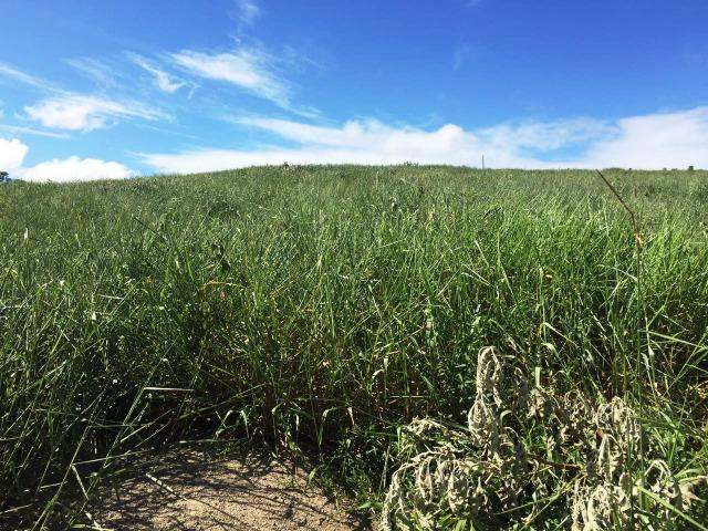Fazenda 1001 hectares próximo a Teófilo Otoni/MG - Foto 11