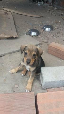 Doação cães vira lata - Foto 2