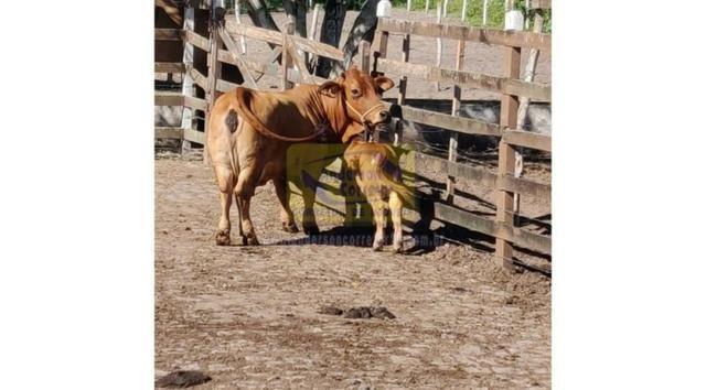 Vendo Lote No Condomínio Fazenda Gramado - Gravatá/PE / Código Do Imóvel : LT0963 - Foto 8