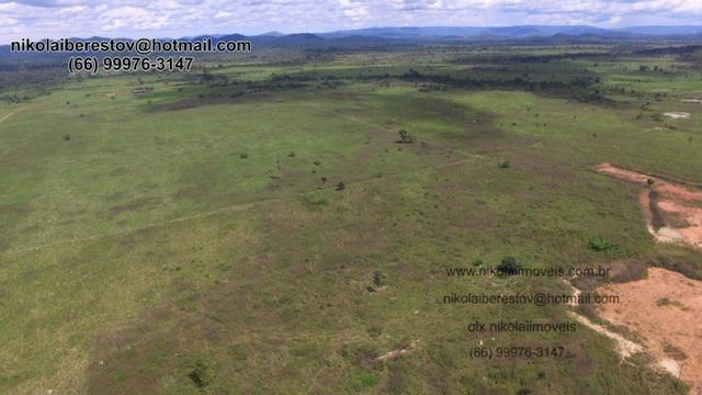 Fazenda nordeste mt 630 hectares nikolaiimoveis
