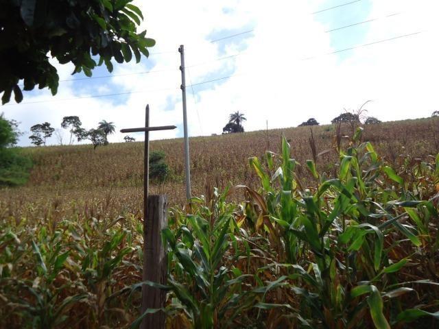 226B/Fazendinha de 15 ha com terras extraordinárias - grande oportunidade - Foto 15