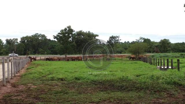 Fazenda 200 hectares na beirada br 070 - Foto 16