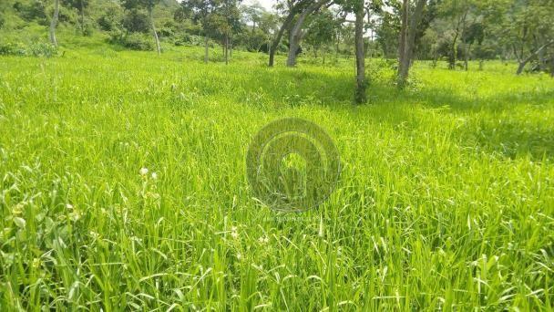 Fazenda 200 hectares na beirada br 070 - Foto 10