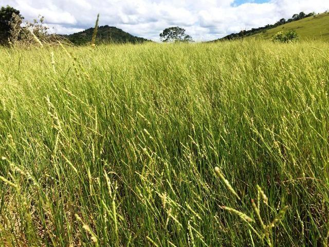 Fazenda 1001 hectares próximo a Teófilo Otoni/MG - Foto 4