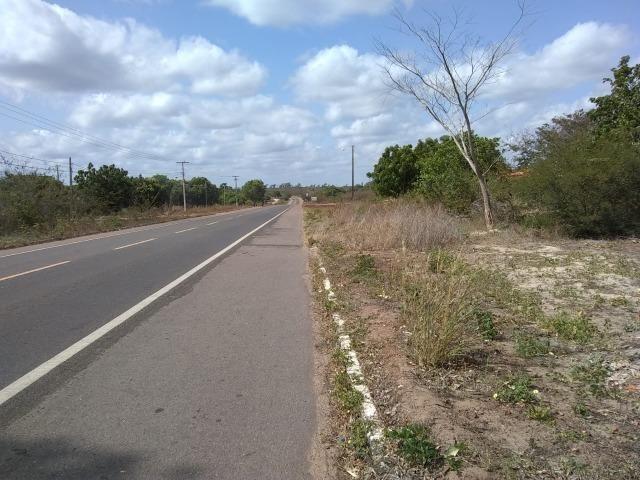 Terreno na baixa da carnaúba no km16 Parnaíba PI - Foto 6