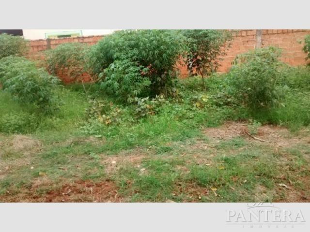 Chácara à venda com 2 dormitórios em Ribeiro dos santos, Olímpia cod:57203 - Foto 3
