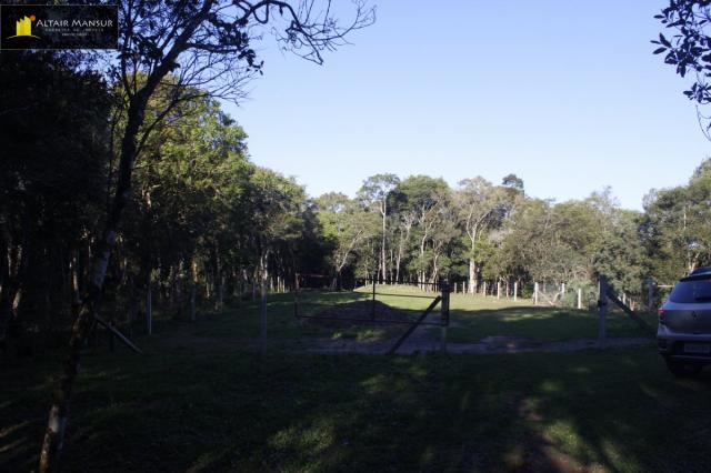 Terreno para Venda em Lagoa Tijucas do Sul-PR - Foto 13
