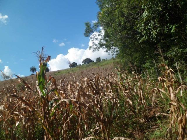 226B/Fazendinha de 15 ha com terras extraordinárias - grande oportunidade - Foto 5