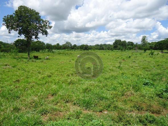 Fazenda 200 hectares na beirada br 070 - Foto 19