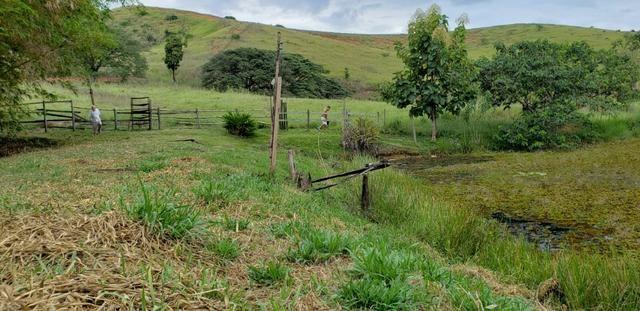 Fazenda 12 alqueires em Governador Valadares/MG - Foto 19