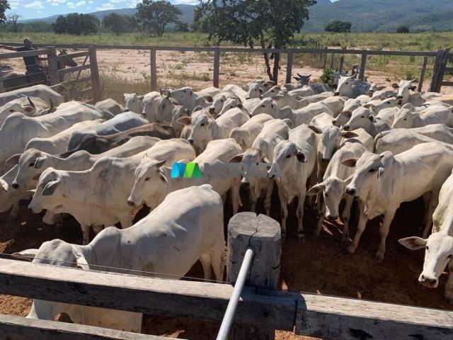 FAZENDA À VENDA - 1.035 HECTARES - JOAQUIM FELÍCIO (MG) - Foto 10