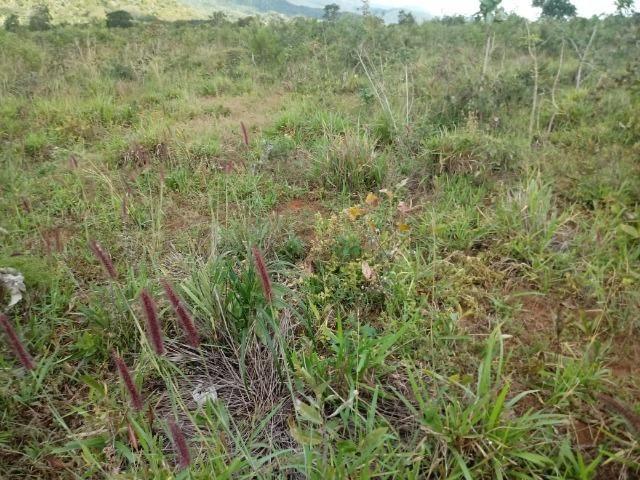 Fazenda de 784,77 hectares ha 140 km de Cuiabá em Rosário Oeste MT - Foto 18