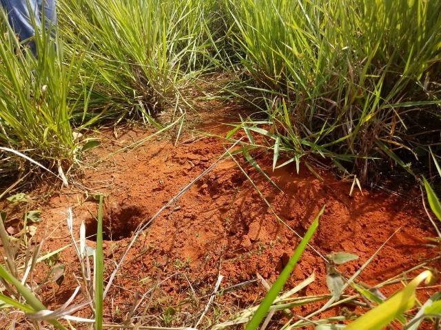 Fazenda de 784,77 hectares ha 140 km de Cuiabá em Rosário Oeste MT - Foto 20