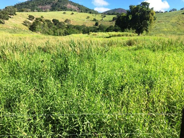 Fazenda 1001 hectares próximo a Teófilo Otoni/MG - Foto 14
