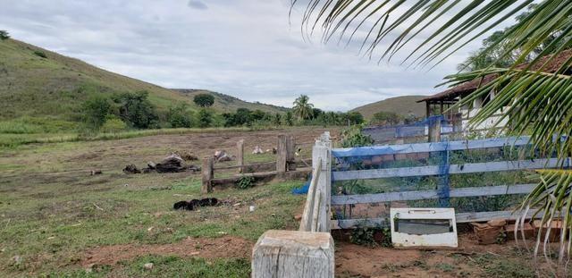 Fazenda 12 alqueires em Governador Valadares/MG - Foto 18