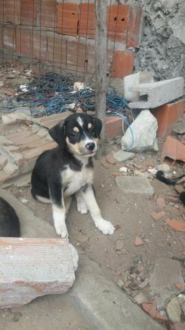 Cãezinhos par doação
