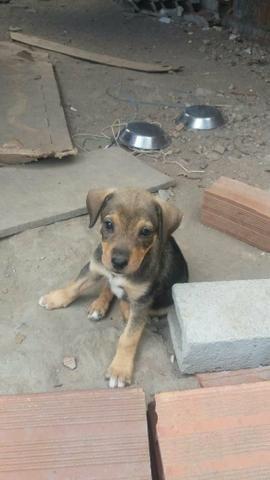 Cãezinhos par doação - Foto 2