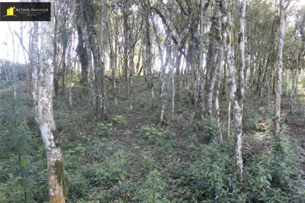 Terreno para Venda em Lagoa Tijucas do Sul-PR - Foto 8