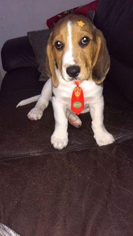 Vendo ou troco Beagle - Foto 5