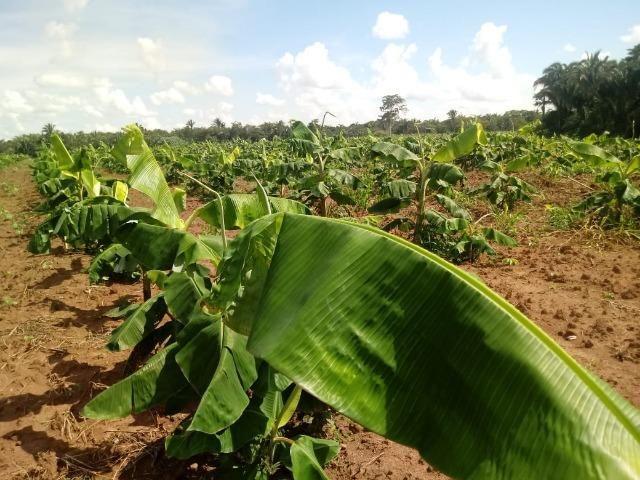 Fazenda de 784,77 hectares ha 140 km de Cuiabá em Rosário Oeste MT - Foto 15