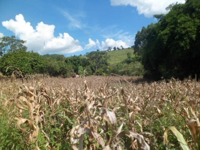 226B/Fazendinha de 15 ha com terras extraordinárias - grande oportunidade - Foto 7