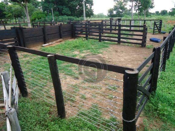 Fazenda 200 hectares na beirada br 070 - Foto 20