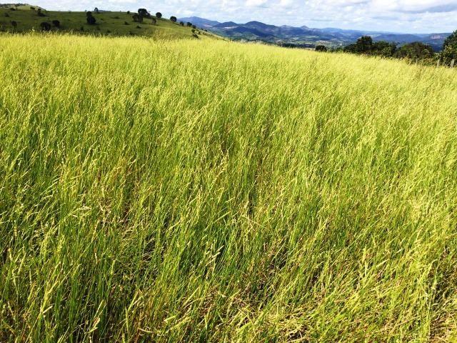 Fazenda 1001 hectares próximo a Teófilo Otoni/MG - Foto 12
