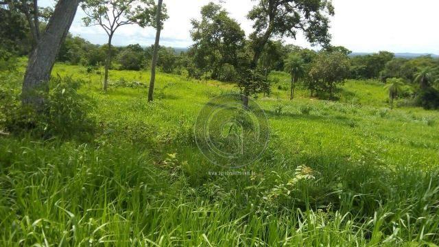 Fazenda 200 hectares na beirada br 070 - Foto 8