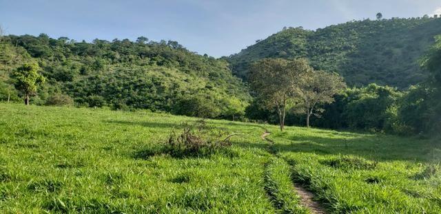 Fazenda 20 alqueires em São Jose Safira / MG - Foto 11