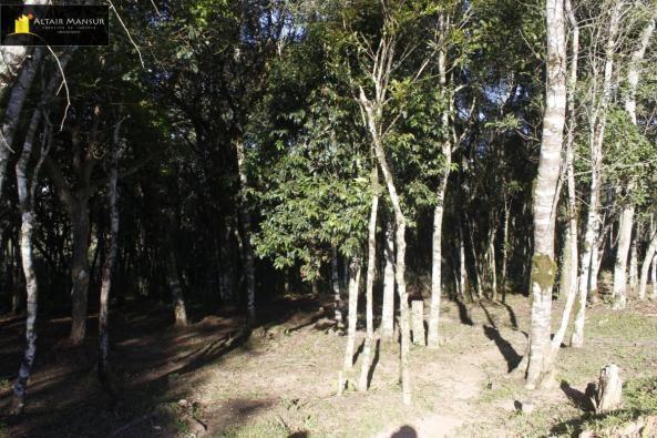 Terreno para Venda em Lagoa Tijucas do Sul-PR - Foto 11