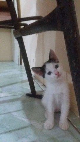 Gatinhos para adoção. Lindos e bem cuidados!