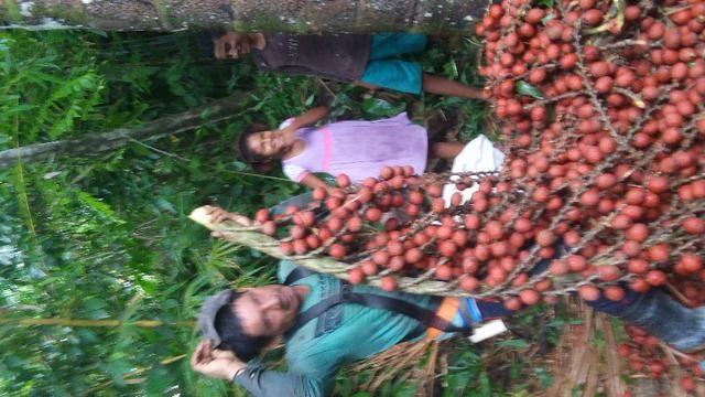 Vendo buriti no saco e em popa tambem aceitamos encomendas - Foto 2