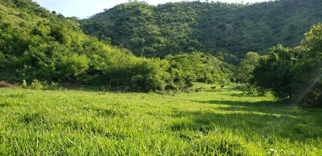 Fazenda 20 alqueires em São Jose Safira / MG - Foto 18
