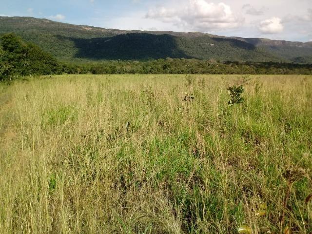 Fazenda de 784,77 hectares ha 140 km de Cuiabá em Rosário Oeste MT - Foto 14