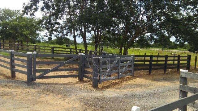 Fazenda 200 hectares na beirada br 070 - Foto 14