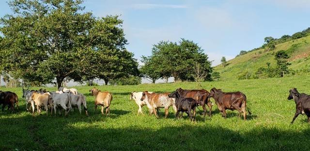 Fazenda 20 alqueires em São Jose Safira / MG