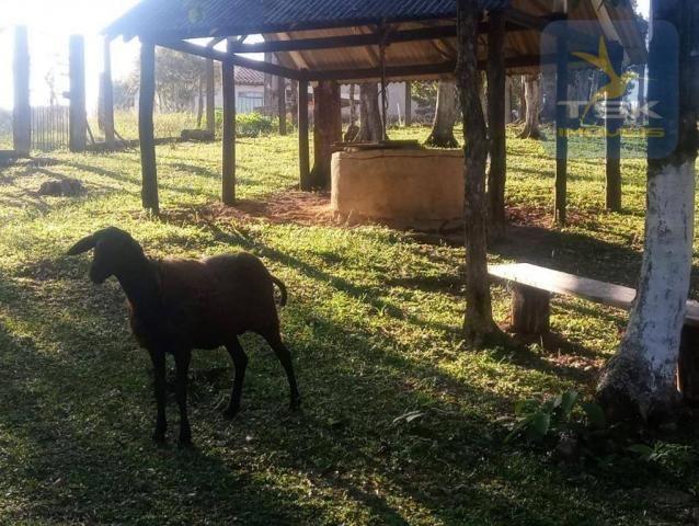 CH0386 - Chácara à venda, 6050 m² por R$ 130.000 - Zona Rural - Quitandinha/PR - Foto 4