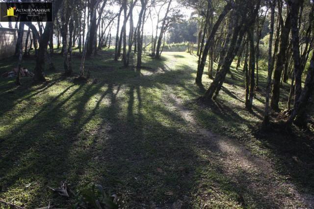 Terreno para Venda em Lagoa Tijucas do Sul-PR - Foto 15