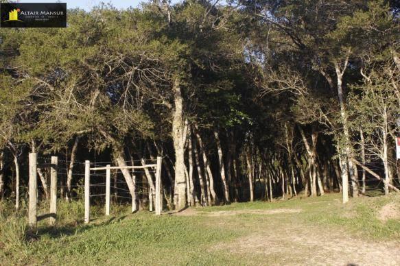 Terreno para Venda em Lagoa Tijucas do Sul-PR - Foto 4