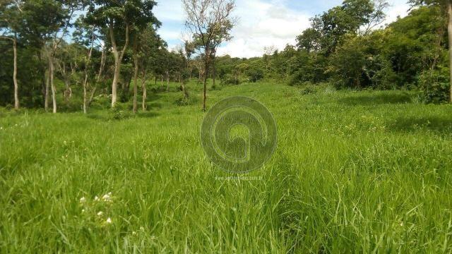 Fazenda 200 hectares na beirada br 070 - Foto 11