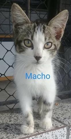 Adoção responsável de gatos - Foto 2